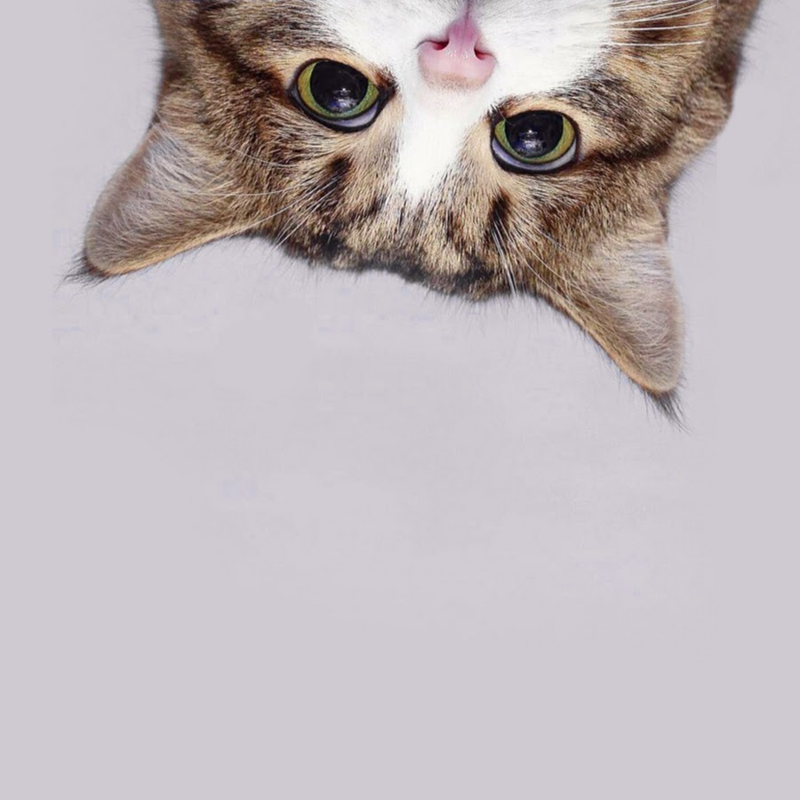 Kitty Cat Picture photo 22