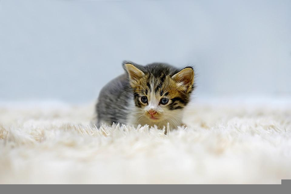 Kitty Cat Picture photo 21