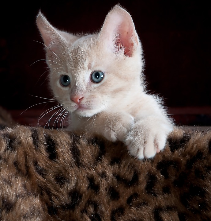 Kitty Cat Picture photo 28