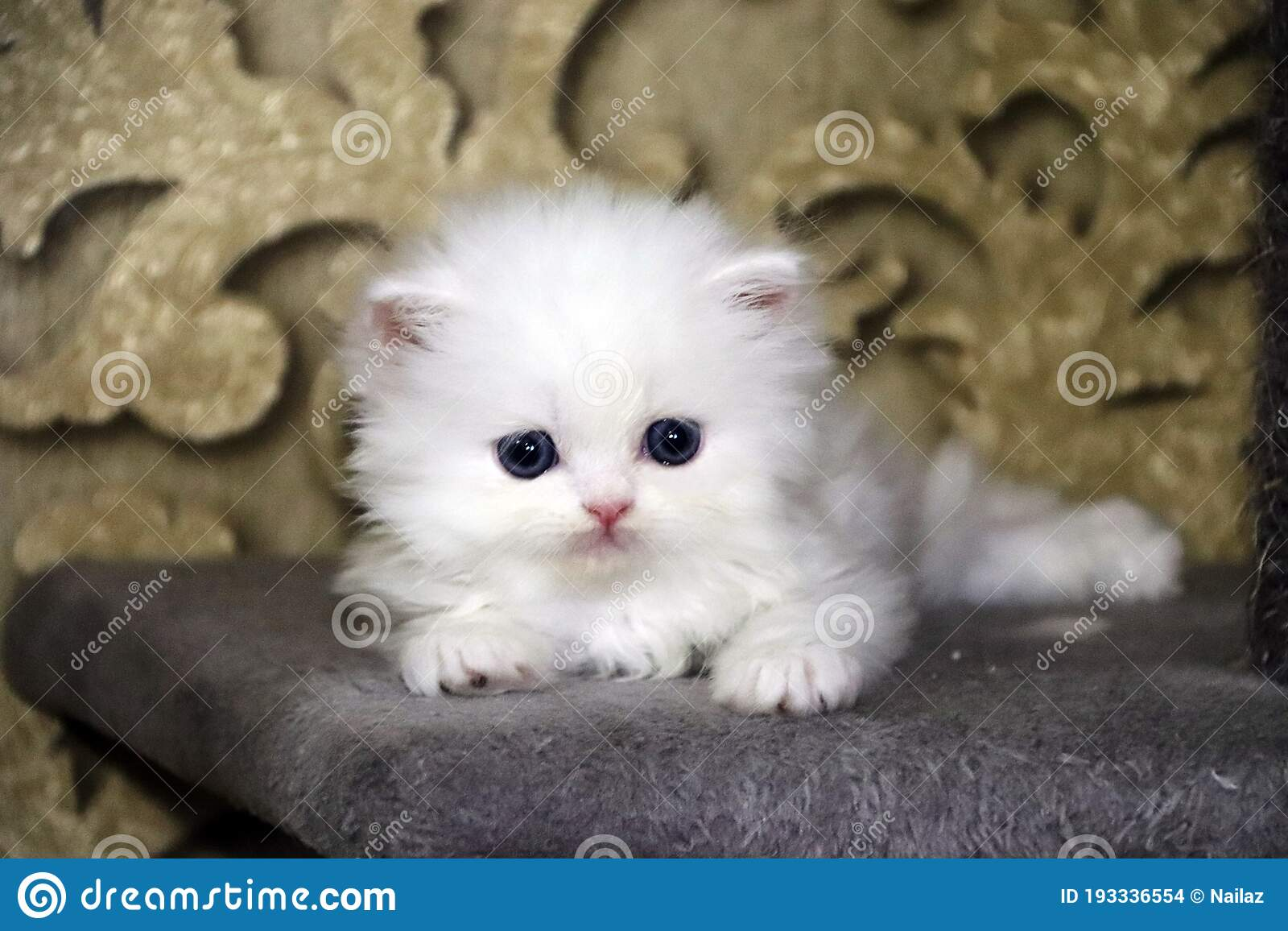 Kitty Cat Picture photo 4