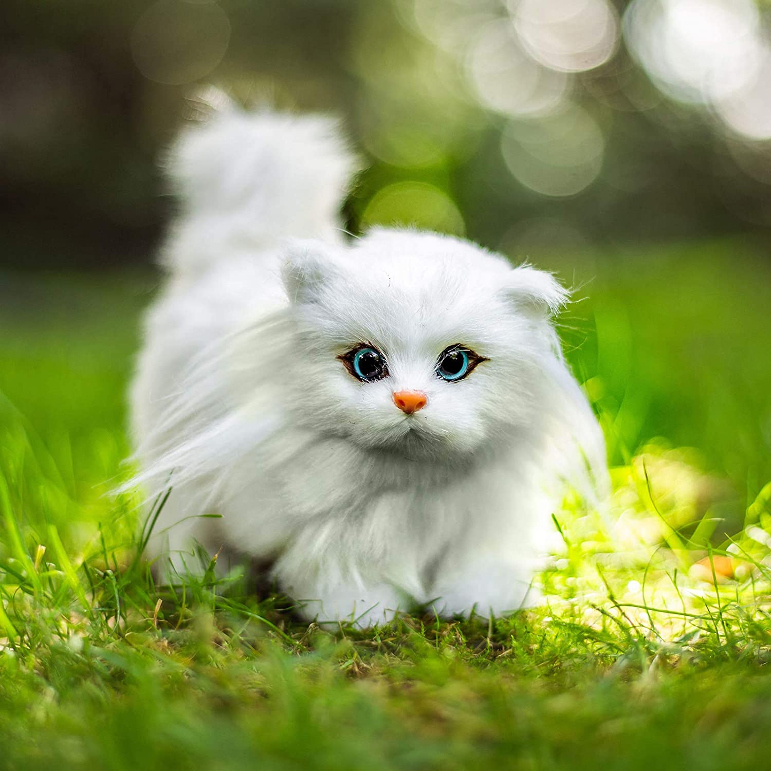 Kitty Cat Picture photo 11